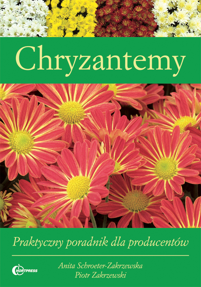 Chryzantemy_165x235